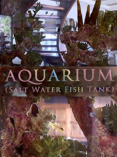 Aquarium (Salt Water Fish Tank)
