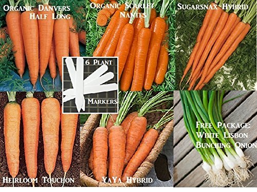Bulk 3 Carrot Seeds Survival Seeds 900 Seeds Upc 646263361016 + 6 Plant Markers Danvers Nantes Sugarsnax (Taylor 900 compare prices)