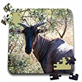 Angelique Cajam Safari Animals - South African Kudu - 10x10 Inch Puzzle (pzl_20111_2)