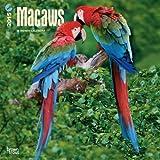 Macaws 2015 Calendar