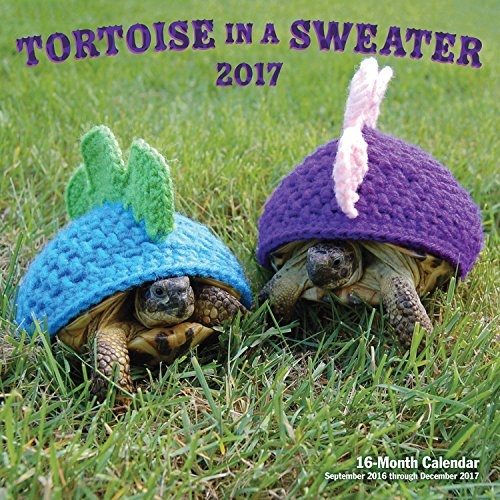 Tortoise in a Sweater 2017 calendar