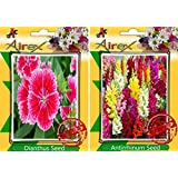 Airex Dianthus And Antirrhinum Flower Seeds ( Pack Of 30 Seeds Per Packet)