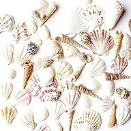 Sea Shells Mixed Beach Seashells – Va…