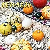 おもちゃかぼちゃ ハロウィン観賞用かぼちゃ 装飾 飾り付け ハロウィン