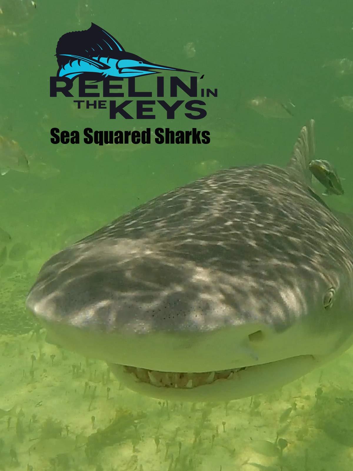 Reelin' In The Keys - Sea Squared Charters -Sharks