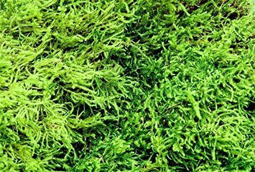 Appalachian Emporiums Live Feather and Sheet Moss 1 Quart for Terrariums Vivariums Bonsai Reptile