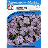 Thompson & Morgan 3070 Dianthus 'Siberian Blues' Exclusive Seed Packet
