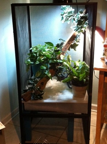 amazoncom zoo med reptibreeze open air screen cage