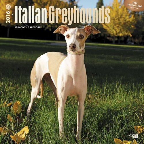 Greyhounds Italian 2016 Wall