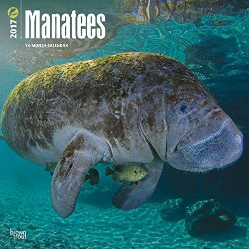Manatee 2017 Calendar<br> 12 x 12in