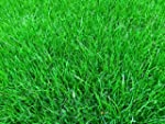 1kg Grass Seed covers 35 sqm, Premium...
