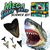 Mega Shark Teeth Science Kit - Includes 5 Real Shark Teeth and Megalodon Tooth Replica!by Discover with Dr. Cool