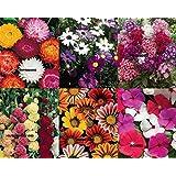 Flower Seeds Combo (helichrysum + Brachycome + Phlox + Hollyhock + Gazania + Vinca Mixed Vty) Avg 30-50 Seeds...
