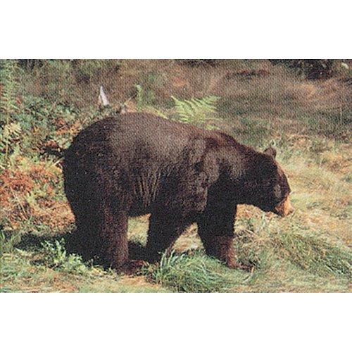 Tru-Life Paper Targets – Bear