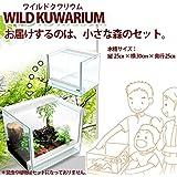 ワイルドクワリウム(WILD KUWARIUM) 昆虫育成水槽 オールグラスケージ