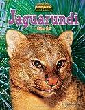 Jaguarundi: Otter Cat (America's Hidden Animal Treasures)