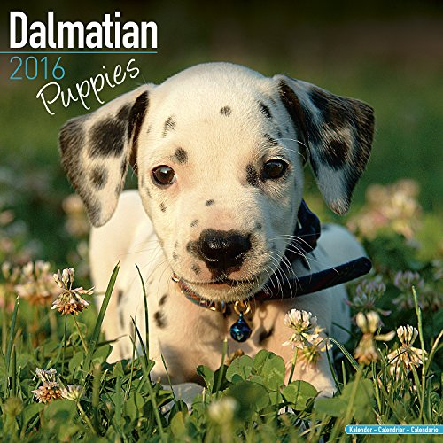 Dalmatian Puppies Calendar - Breed Specific Dalmatian Puppies Calendar - 2016 Wall calendars - Dog Calendars - Monthly Wall Calendar by Avonside