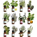Kit aromathérapie - Lot de 12 huiles essentielles 10ml H.E.B.B.D