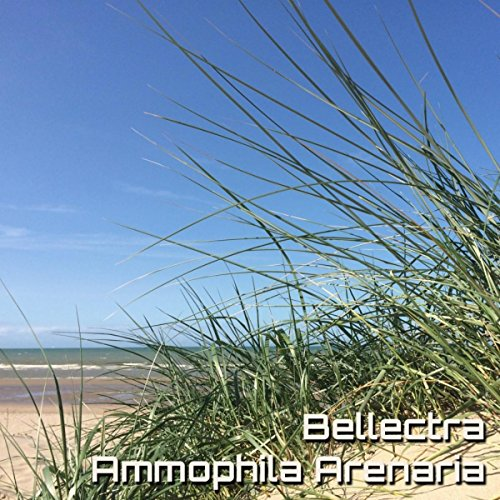 ammophila-arenaria-original-mix