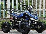 IceBear(アイスベアー) 最新型四輪バギー ATV 50cc 前進3速バック付 ミニカー登録 公道走行可 青 HL50HBL