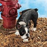 Design Toscano QL6280 Lifting a Leg Naughty Boston Terrier Dog Statue