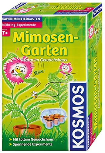 kosmos-657031-mimosen-garten