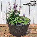 睡蓮鉢 メダカ鉢 金魚鉢 グレー 直径44cm 高さ25cm 軽量2kg、割れにくい、頑丈な厚み1.2cm