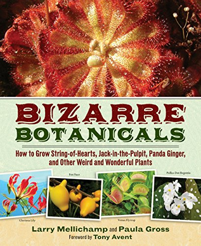 bizarre-botanicals-how-to-grow-string-of-hearts-jack-in-the-pulpit-panda-ginger-and-other-weird-and-