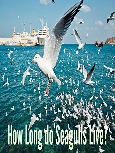How Long Do Seagulls Live?