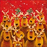 Christmas cards - Reindeer Kisses - a box of 10 Christmas cards.by Woodmansterne