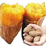 国華園 種子島産 安納芋小芋 5kg1箱 【契約農園:中園ファームさんの安納芋】