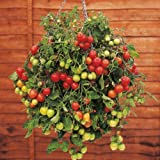 Suttons Seeds 150520 Tumbling Tom Red Tomato Seed