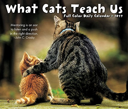 What Cats Teach Us 2017 Box Calendar