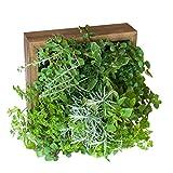 Sage Living Wall Soil-free Herb Garden