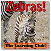 Zebras! Learn About Zebras And Learn To Read - The Learning Club! (45+ Photos of Zebras)