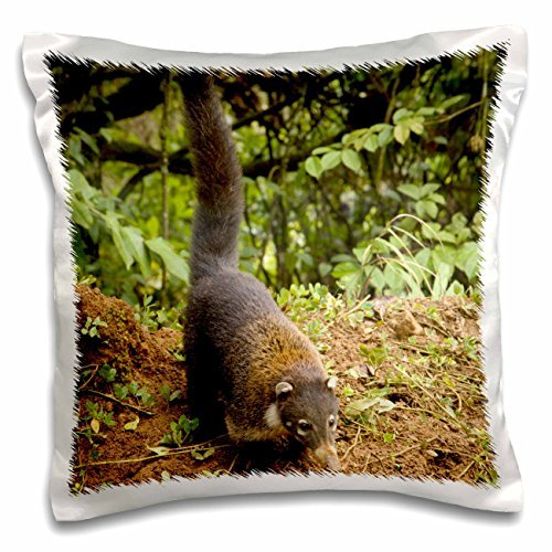 Wildlife - Costa Rica, La Paz area, Coatimundi wildlife 16x16 inch Pillow Case