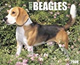 Beagles 2009 Wall Calendar