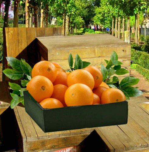 Citrus Fest Gift Box