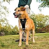 Kurgo Tru-Fit Smart Dog Harness, Black, Medium - Lifetime Warranty