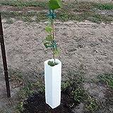Grape Vine Planting Shelter 5 Pack (Color: White)