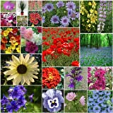 20 Packs of Flower Seeds - Poppy, Bluebell, Foxglove etcby Jack Smiths