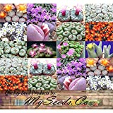 5,000+ Conophytum Species Mix Seeds - Cactus Mix - House Plants cactus cacti succulent For Greenhouse and Outdoor Too - These seeds are VERY small, each pack of seed will contain more than advertised. But if you are uncomfortable working with VERY small seeds please do NOT purchase this product
