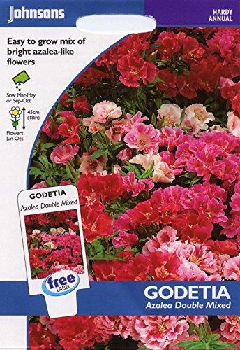 johnsons seeds - Pictorial Pack - Fiore - Godetia Azalea Double Mix - 750 Semi
