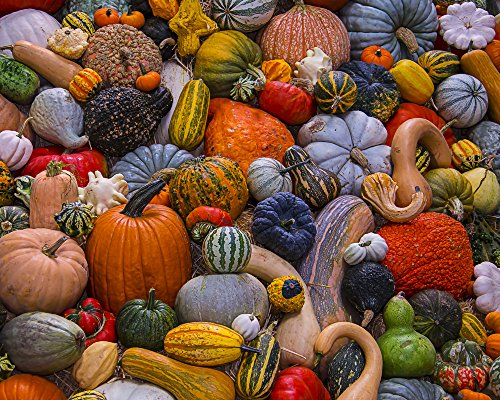 Autumn Harvest Jigsaw Puzzle 1000 Piece