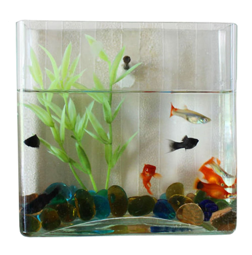 Buy freshwater aquarium fish online india - Buy Wall Mount Hanging Beta Fish Bubble Aquarium Bowl Tank Square Online At Low Prices In India Amazon In