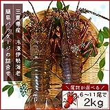 三重県産 伊勢海老詰合せ 7尾で約2kg 刺身用瞬間冷凍 伊勢エビ 尾数選べます