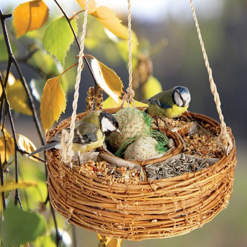 LUXURY BIRD SEED HANGING BASKET-Ideal Gift For Fathers Day Plant & Flower Gifts For Dad,Father,Mum,Grandad,Grandma and for all occasions