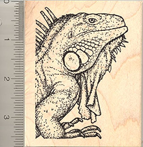 Iguana Rubber Stamp, Lizard native to Mexico, Central American, Polynesia