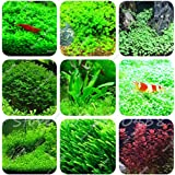 Hot Sale! 1000 Pcs Aquarium Grass Seeds (Mix) Water Aquatic Plant Seeds Decoration Ornament Plantas Raras Cheap Aquarium Fish