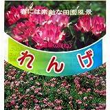 れんげ種子【蓮華 レンゲ】数量:1kg